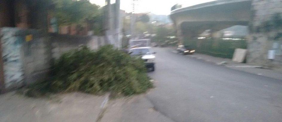 Prefeitura podas árvores e Deixa galhos abandonados no Jaraguá