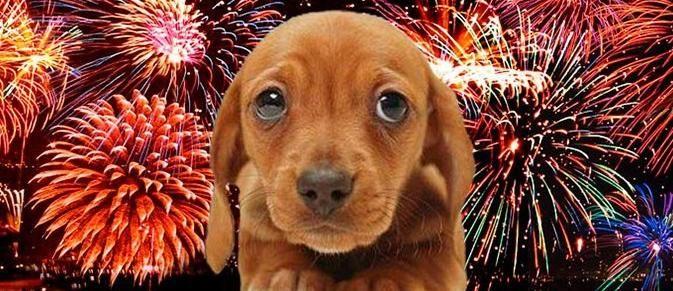Saiba como proteger seu bichinho do barulho dos fogos de artifício
